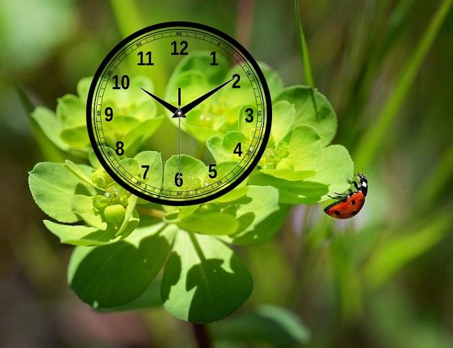 Биологические ритмы и часы