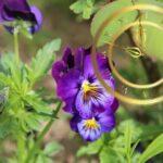 Цветы живые часы