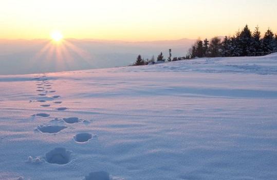 Йети Гималаев и снежный человек легенды поиска